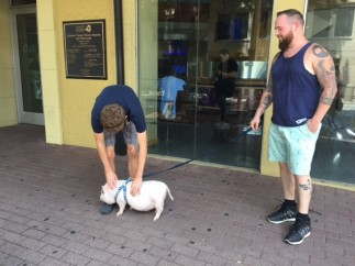 Andrew & Pig