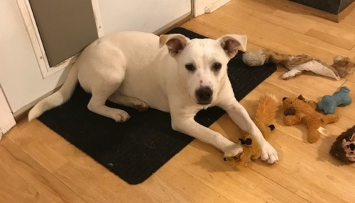 Stella with toys